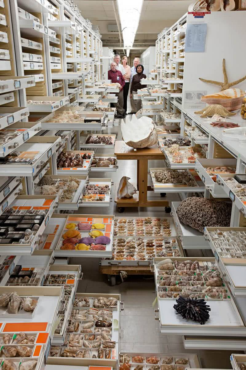 backroom-storage-at-the-smithsonian-natural-history-museum-etoday-06