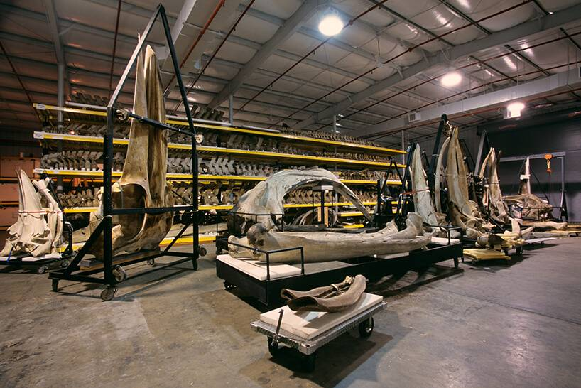 backroom-storage-at-the-smithsonian-natural-history-museum-etoday-09